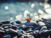 Small seashell lies on pebble on sea background with bokeh. Small seashell lies on pebble on blue sea background with bokeh Royalty Free Stock Photo