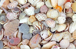 Small seashells Stock Photography