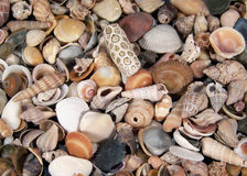 Small Seashells. Full frame color photograph of a lot of small seashells of various shapes and colors Stock Image