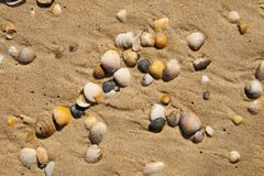 Small seashells over sand Stock Photo