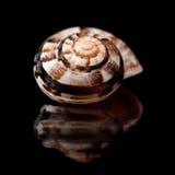 Small seasnail shell Stock Photo