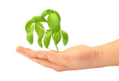Small seedling Stock Images