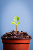 A small seedling grows out of a pot of soil Stock Photos