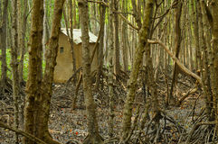 Small shack in mangrove forest Royalty Free Stock Photography