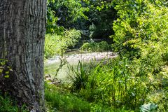 Small shallow stream glinting in sunlight through trees stock images