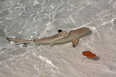 Small shark. In the ocean stock image