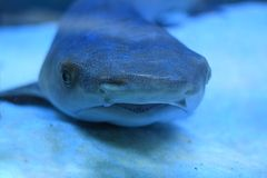 A small shark in an aquarium. On the sand, close-up stock photo