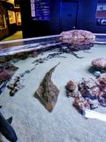 Small shark tank at Austin Aquarium. royalty free stock images