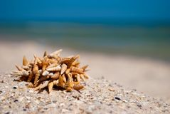 Small sharp seashells lie on the sand on a background of blue sea and blue sky Royalty Free Stock Image