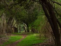 Small shed tucked away just off a walking trail. In a lush green forest with trees bent in an arch over path royalty free stock photography