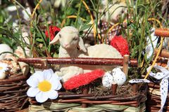 Small sheep as nice easter background Stock Photo