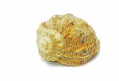Small shell Stock Images