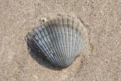 Small shell on beach sand Stock Images