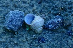 A small shell lies in the sand among the stones. On the beach Royalty Free Stock Photography