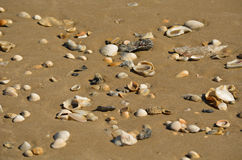 Small Shells in the Sand. Lots of small shell in the sand in Matagorda, Texas Stock Photography