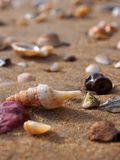 Small shells on the beach Royalty Free Stock Image