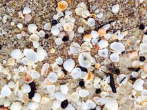 Small Shells on the beach wallpaper Stock Image