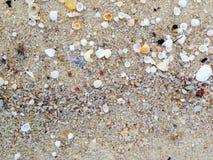 Small Shells on the beach wallpaper Stock Photo