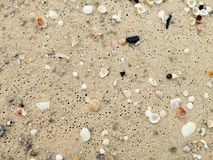 Small Shells on the beach wallpaper Royalty Free Stock Photography