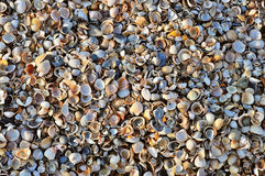 Small shells Royalty Free Stock Photography