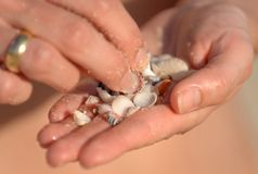 Small Shells in a Hand Royalty Free Stock Photos