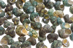 Small shells isolated with clipping patch Stock Image