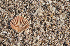 Small shells Stock Photography