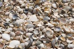 Small shells on the seashore. Small seashells near the sea are beautiful Royalty Free Stock Photos