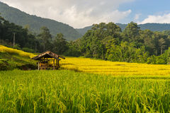 Small shelter at Mae Klang Luang rice terrace Royalty Free Stock Photo