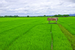 Small shelter and rice field Stock Images