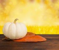 Small shiny pumpkin Stock Image