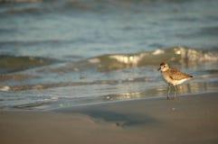 South Texas Birds royalty free stock photography