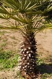 Small short palm tree, tropical beach concept. royalty free stock photography