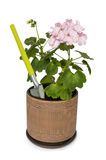 Small shovel and geranium Royalty Free Stock Photos