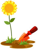 Small shovel with sunflower Royalty Free Stock Photography
