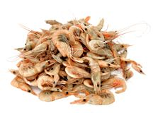 Small shrimp Royalty Free Stock Photography
