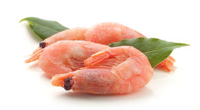 Small shrimps. Some boiled red small shrimps with green bay leaf on the white royalty free stock photography