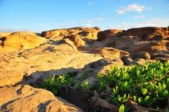 Small shrub plants in desert. Landscape of small shrub plants in desert Royalty Free Stock Photos