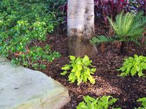 Small Shrubs in Garden. Small green shrubs, a tree trunk and a sandstone rock in a rustic garden stock photography