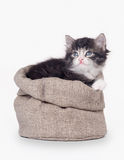 Small siberian kitten in sackcloth bag Stock Image
