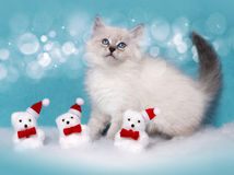 Small siberian kitten and xmas decor bears Royalty Free Stock Photo
