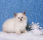 Small siberian kitten and xmas decor bird Royalty Free Stock Photo