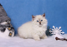 Small siberian kitten and xmas decor Stock Photo