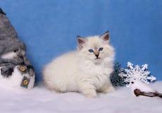 Small siberian kitten and xmas decor stock photo