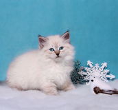 Small siberian kitten and xmas decor Royalty Free Stock Image