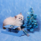 Small siberian kitten and xmas tree Stock Photography