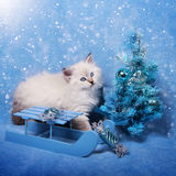 Small siberian kitten and xmas tree in snow stock image