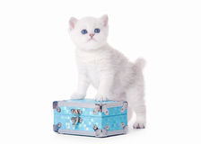 Small silver british kitten on blue chest Royalty Free Stock Photography