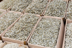Small silver dried fish Royalty Free Stock Photography