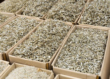 Small silver dried fish Royalty Free Stock Photo